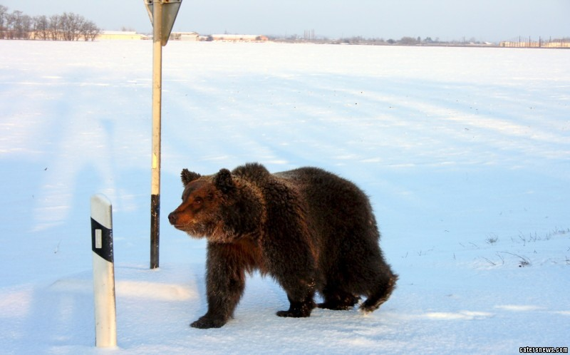 "Sergey, who spotted the bear, said: ""Having driven through Azov City, I just could not believe my eyes, I saw a man and a bear right near the road."""