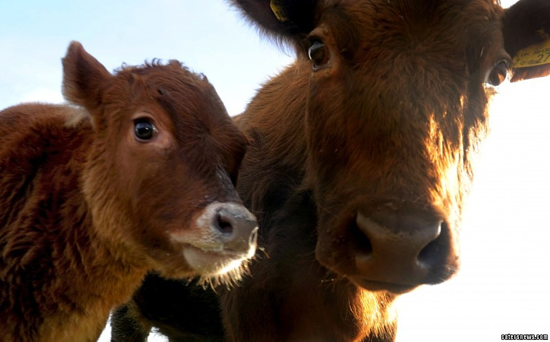 Liz Robinson was left baffled by the arrival of baby Petal as the nursery don't own any bulls