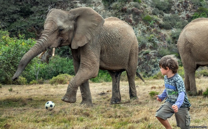 footie-mad Finn enjoyed a competitive kickabout with the playful pachyderms