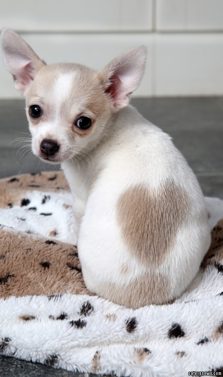 Adorable Puppy Sets Hearts Aflutter With Heart Shaped Birthmark In Time For Valentines Day