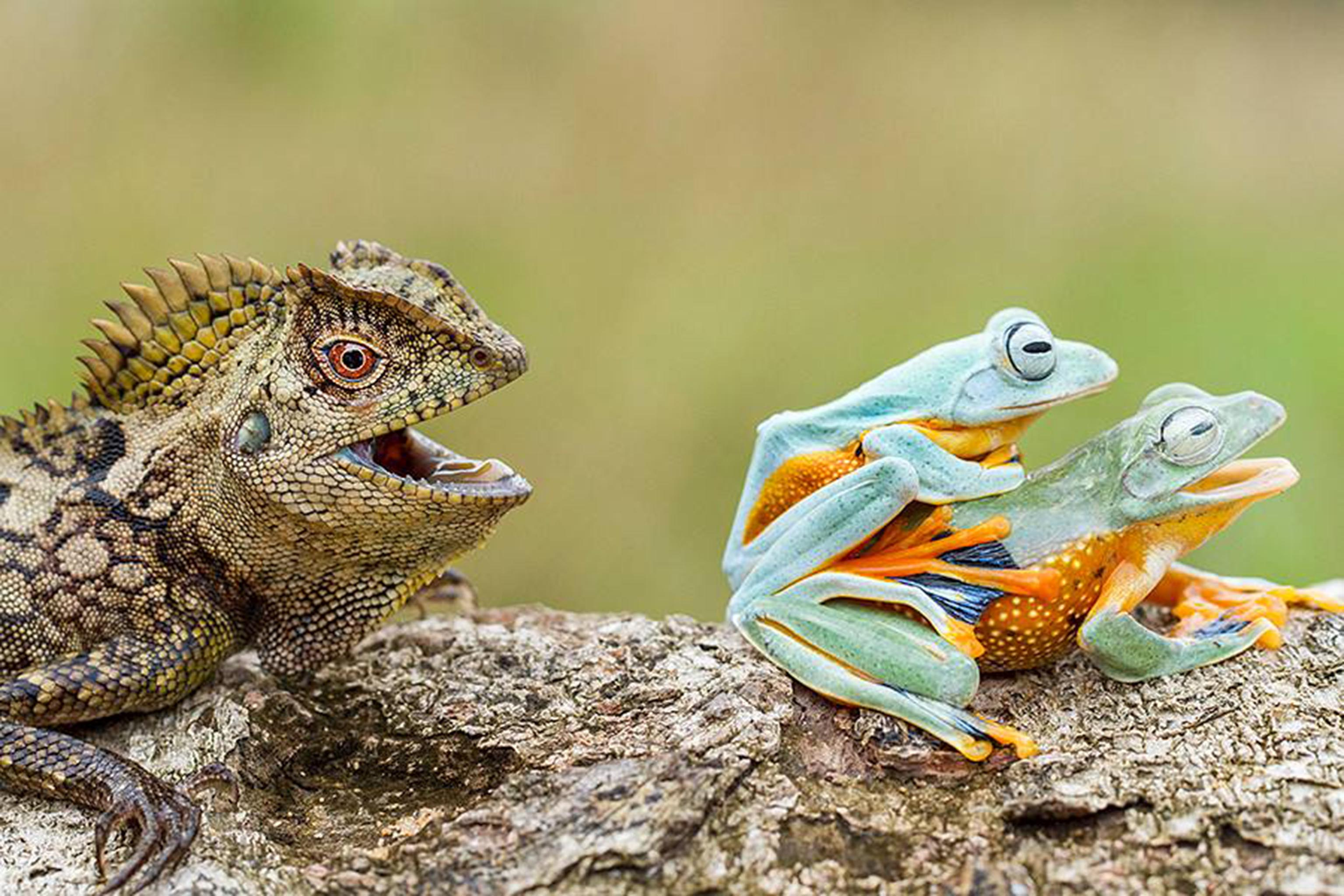 stories animals froggy style these tongue in cheek images give a different meaning to frogs porn
