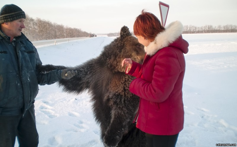 The bear is seen running towards its owner and even receives a friendly pat on the head