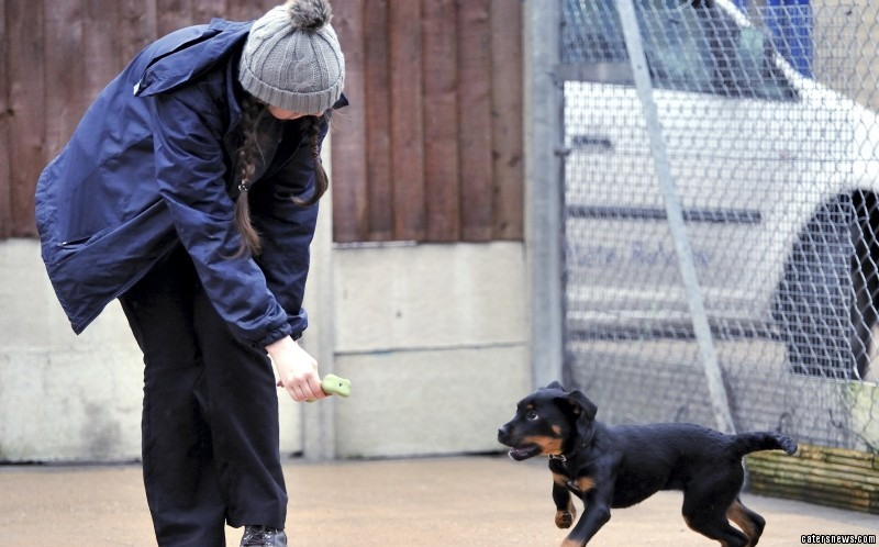 "Leanne Manchester at the Derby RSPCA Centre said: ""She's an adorable dog – so friendly and full of life."""