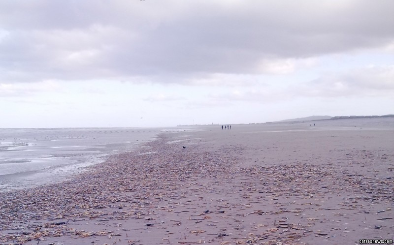 Gordon McGookin said he saw the piles of sea creatures spread for almost half a mile on the beach