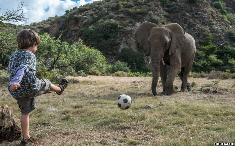 The elephants showing off their impressive ball skills
