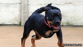 No-one wants to give three legged Ruby a home