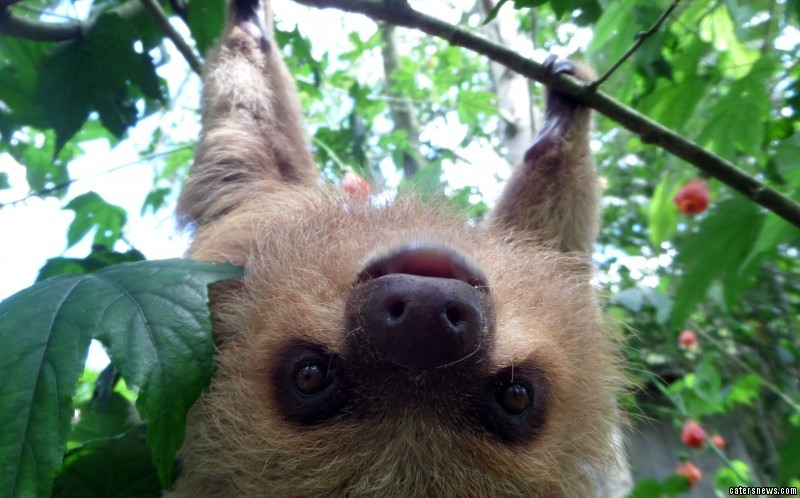 Baby Sloth rescued