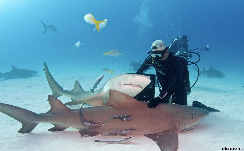"""Eli, founder of Shark Diver Magazine, said: """"There are several sharks which ask for back rubs - the most frequent are Patches, Slash and Gills."""""""