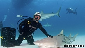 The astonishing footage was captured in January at Fish Tales near Tiger Beach in the Bahamas