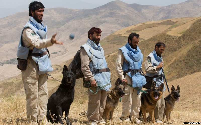 These dogs clear mines in the war fields of Afghanistan