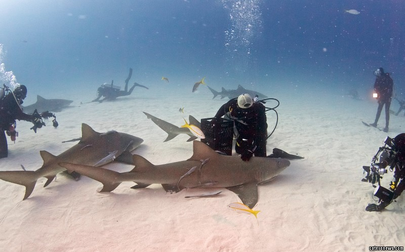 The phenomenal footage captures a lemon shark in a state of total relaxation