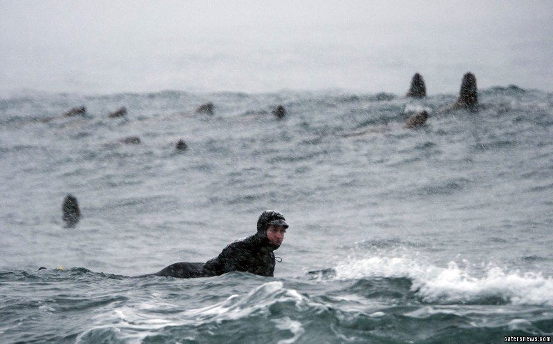 Winter Surfers Attract Sea-lions