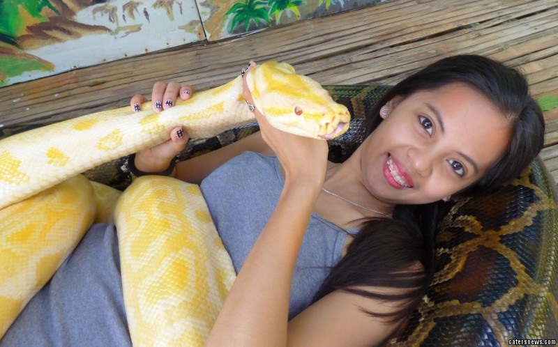 Fancy having a massage with immense Burmese pythons?