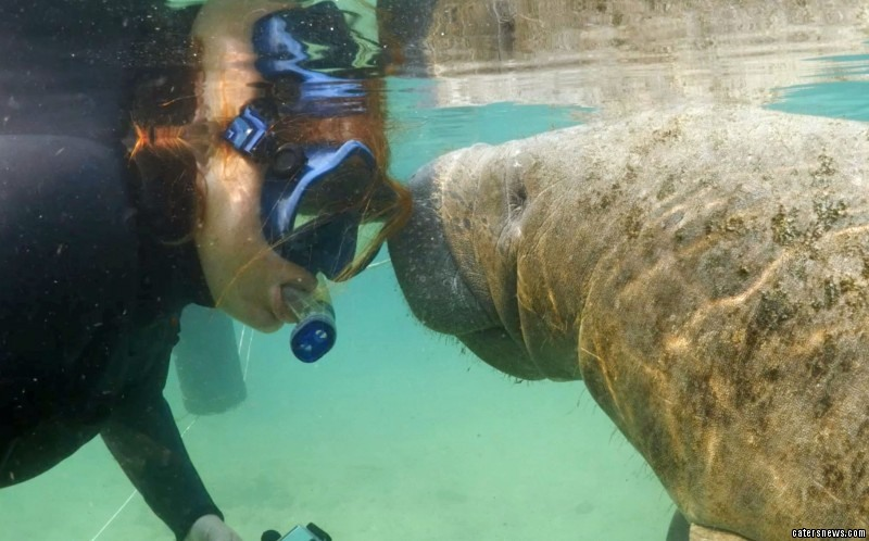 Rebecca Ziegler getting kisses and cuddles from a sea cow