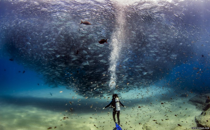 She was diving in Cabo Pulmo, Mexico, when the school of Trevally fish arrived