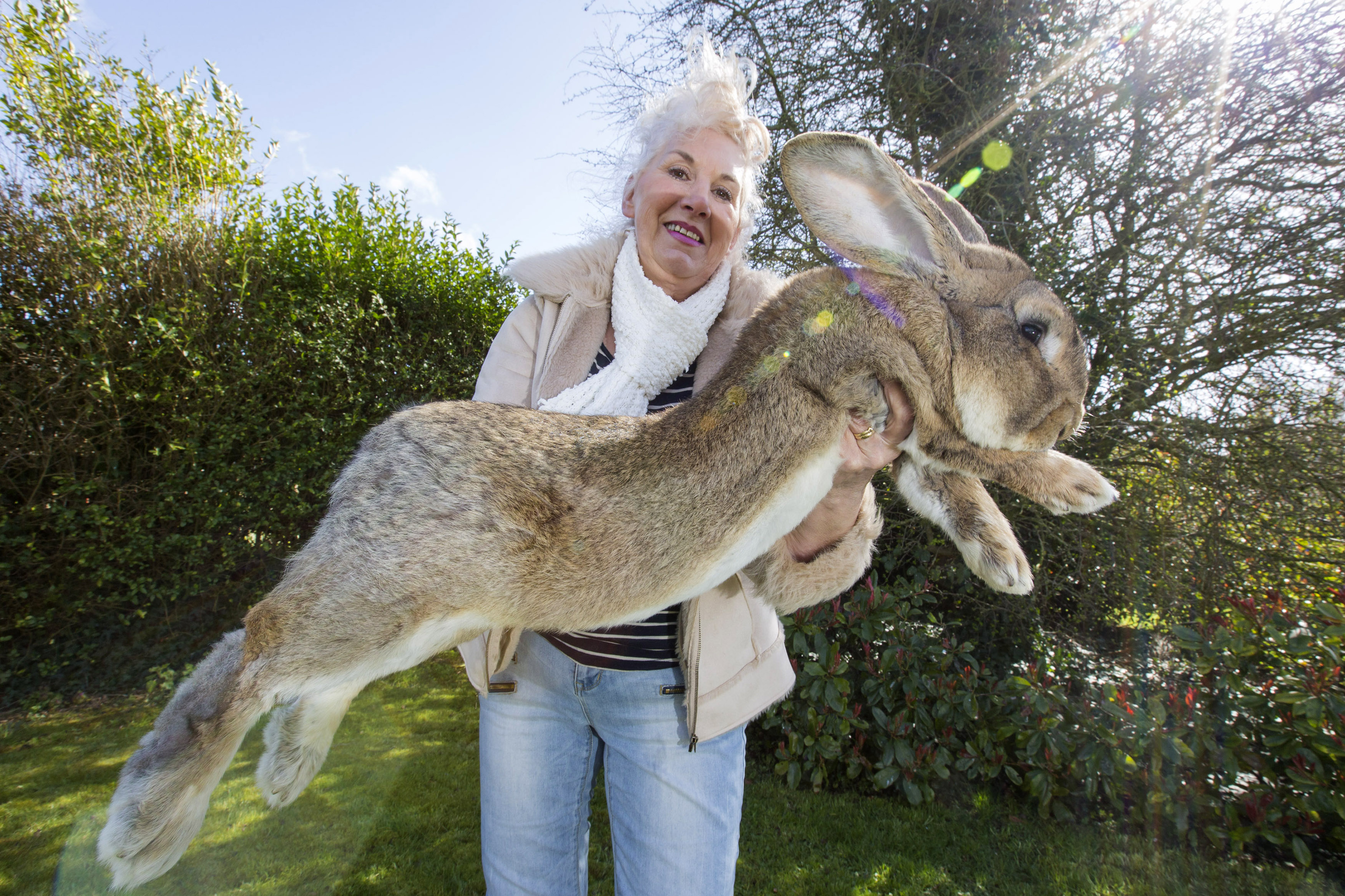 Meet the world's biggest Easter bunny... and his brood