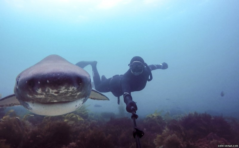 The intrepid divers have made it their life mission to travel the world to take snaps with sea life