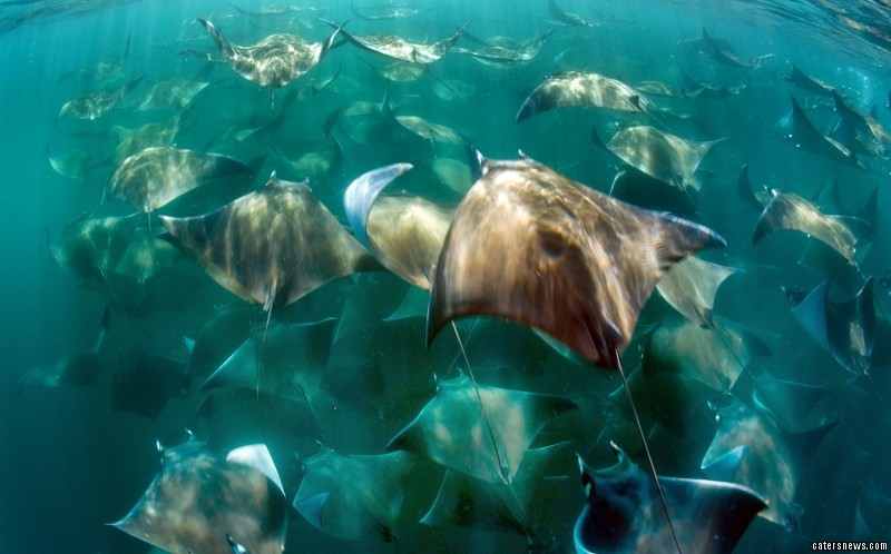 The pair spotted the school of rays on their way to lunch after they'd spent the morning photographing dolphins