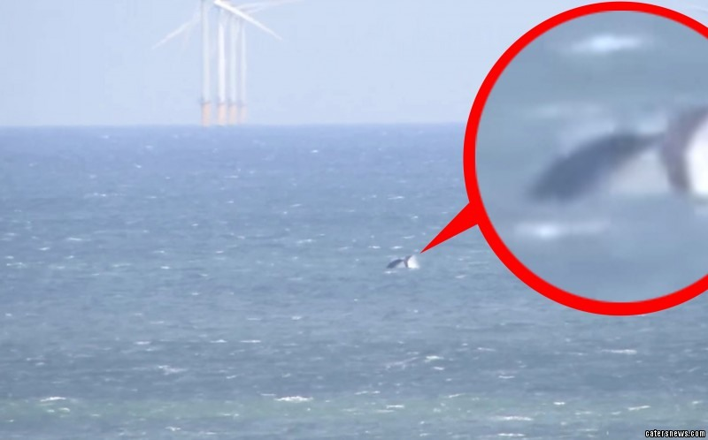 Kayn Forbes  captured what is believed to be the first spring sighting of a humpback whale off the coast of Norfolk