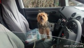 Alfie the Yorkshire Terrier and fellow terrier Lillie were stolen from their home in Wednesbury