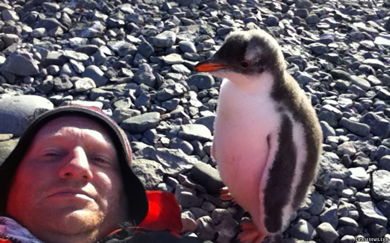 Adorable Baby Penguin Jumps On Man S Belly
