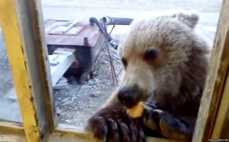 The harmless bear munches on the biscuit at the window ledge