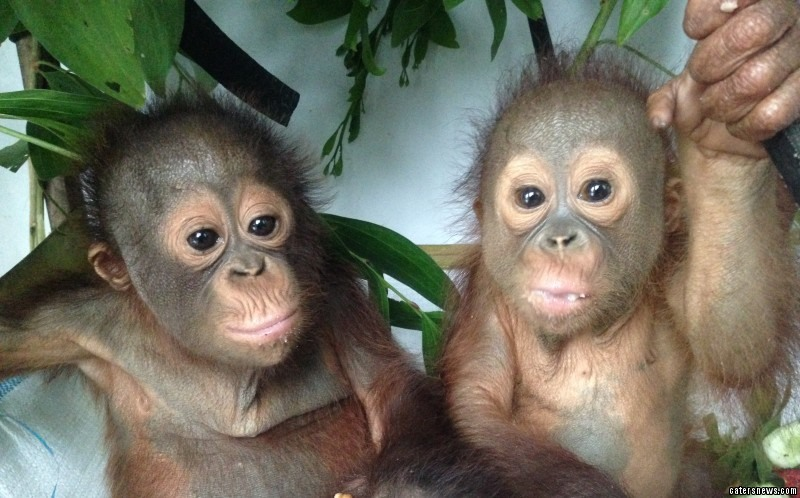 Budi is making remarkable progress in new video footage which shows him eating with his new best friend