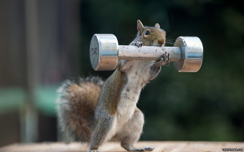 This squirrel is clearly nuts about keeping fit