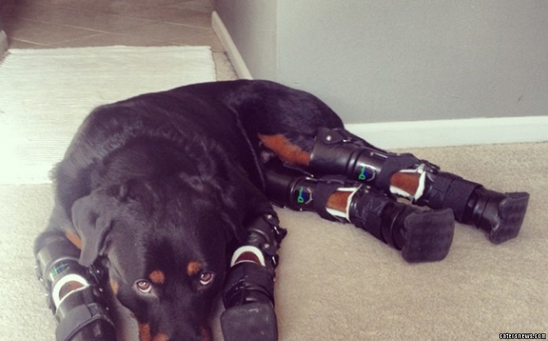 He became disabled after all four of his paws were frostbitten