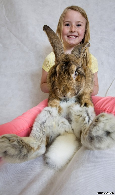 Meet The World S Biggest Easter Bunny And His Brood