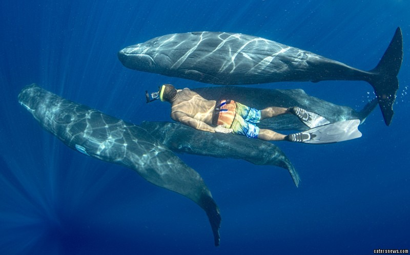 """Andrew, who runs whale watching tours from Rosaeu in Dominica, says it is """"a joy"""" to be able to work with the graceful creatures"""