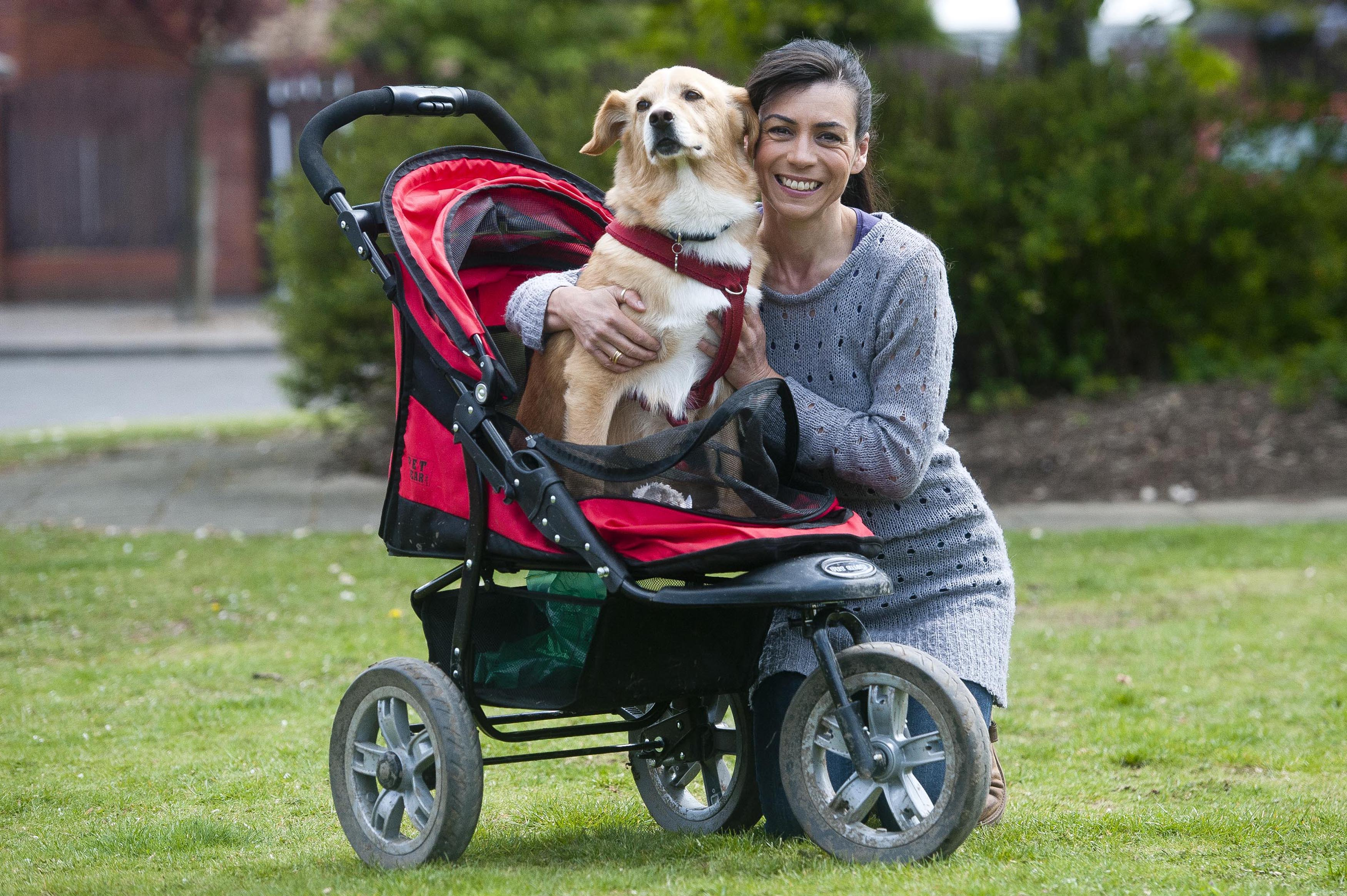 Dog Needs Buggy To Get Around After Legs Were Amputated