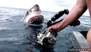 Dave Riggs captured the startling moment a great white shark burst out of the water