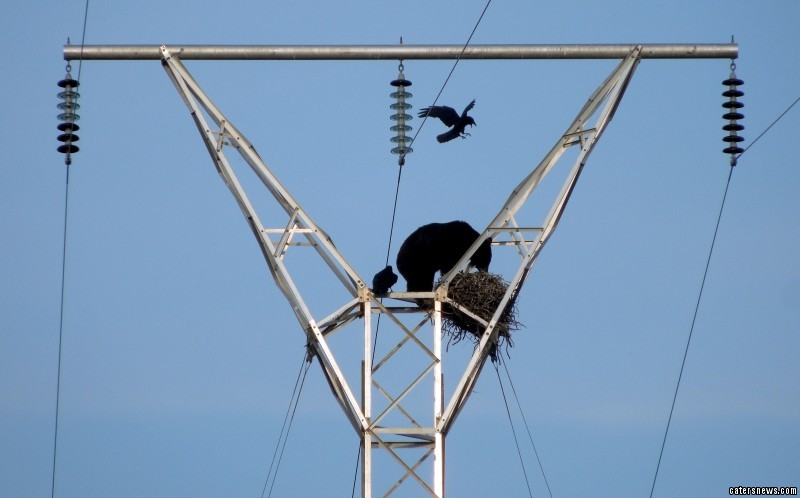 The bear scouted the metal tower from the base for birds' nests