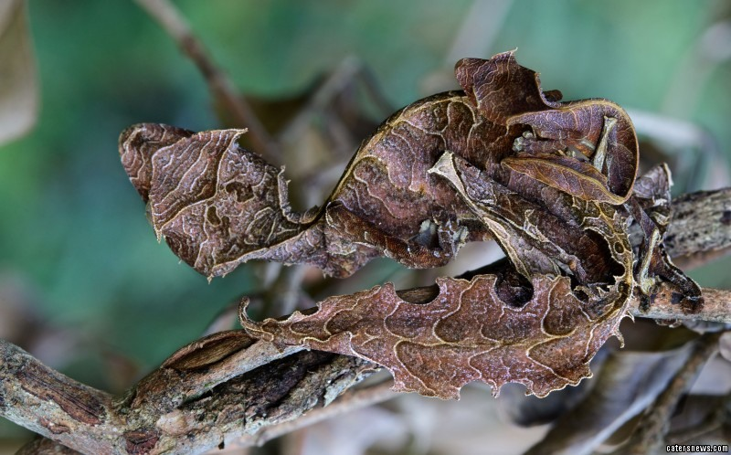 "Paul, 30, said: ""Finding such well camouflaged creatures is often a result of luck."""