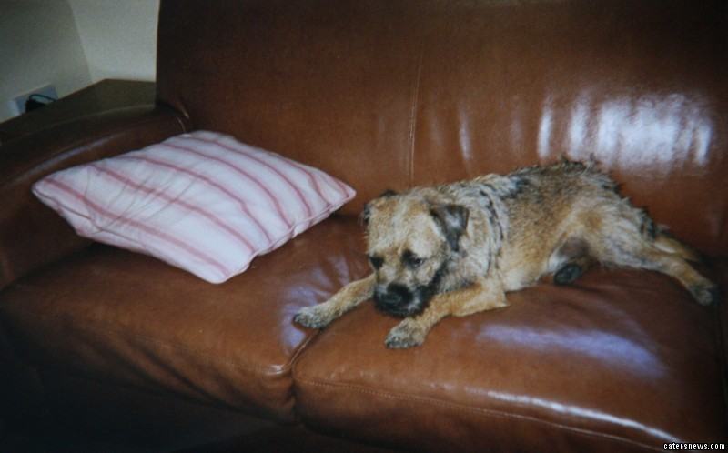 The Boddingtons had bought Meg in 2007 as a companion for their seriously ill daughter, Lauren, who passed away in 2009