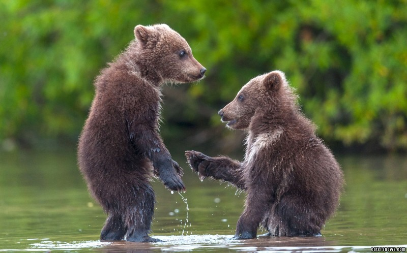 The adorable set of images was captured in Kamchatka, Russia