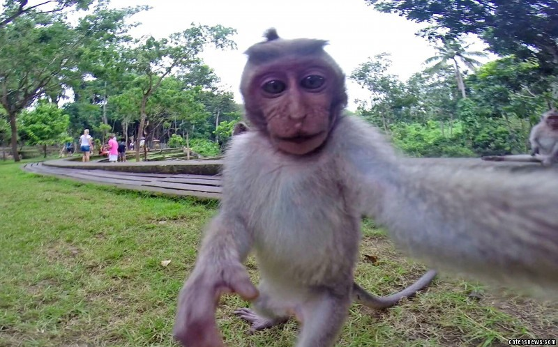 The Long-tailed Macaque taking a selfie
