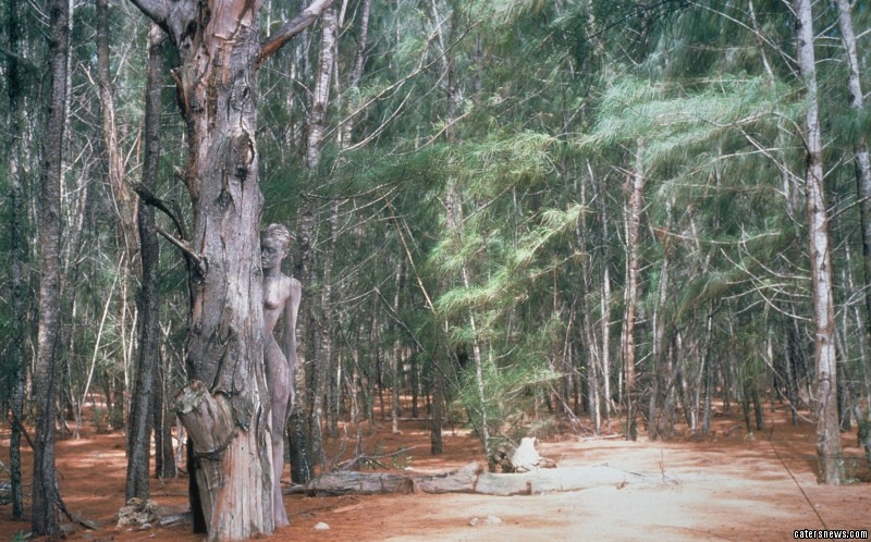 Painted into a tree using body paints in Dry Forest in Piones, Puerto Rico