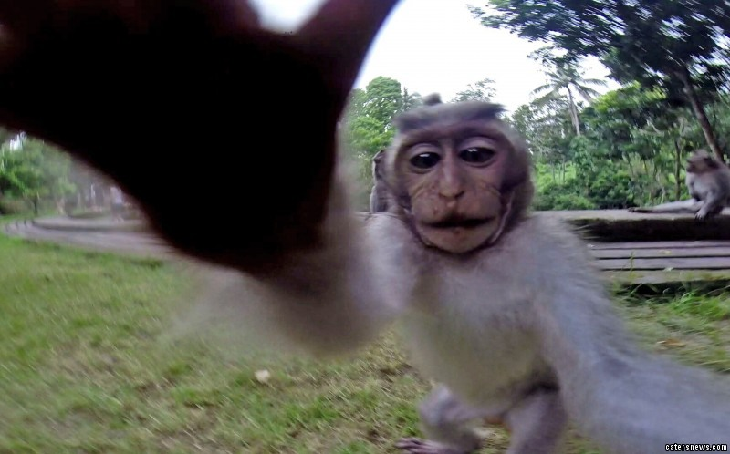 The monkey started licking the lens and pulling poses
