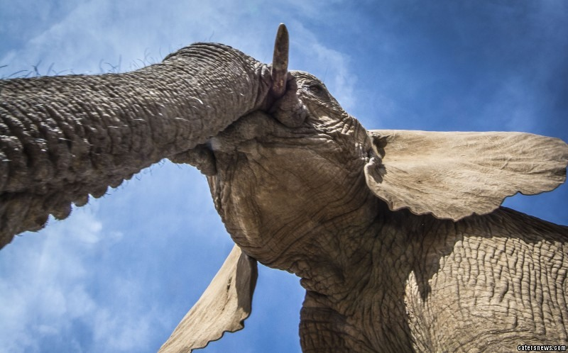 Daryl Balfour has finally managed to capture elephants on film