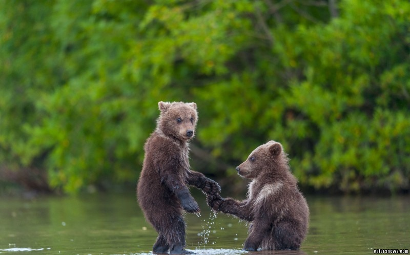The adorable duo appear to shake on their decision - as one offers his outstretched paw