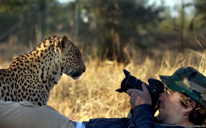 Russell gets extremely close to the leopard and starts to take its photo