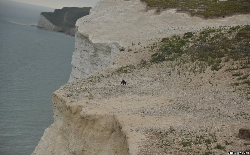 Sheep forced toward edge of a cliff