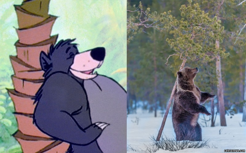 A bear appears to recreate an iconic moment from The Jungle Book