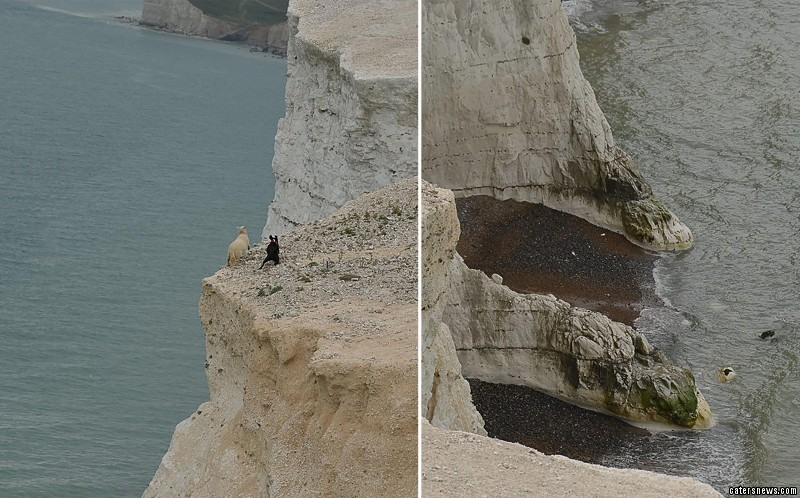 Horrified onlookers watched in terror as one of the sheep got too close to the edge of the cliff  and fell into the  rocks below and died