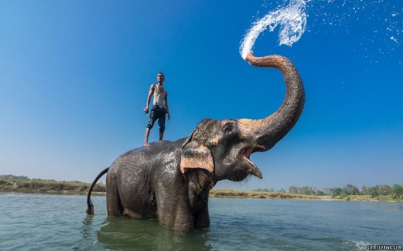 This is the incredible moment a man decided to take a wash on the wild side as he went for a dip in the lake with his ELEPHANT.