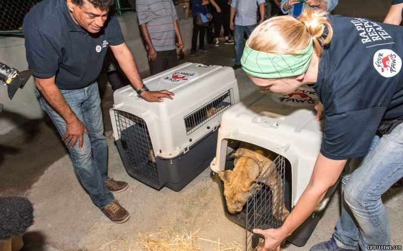 PIC FROM FOUR PAWS / CATERS NEWS - (PICTURED: Max and Mona being let out for health checks)
