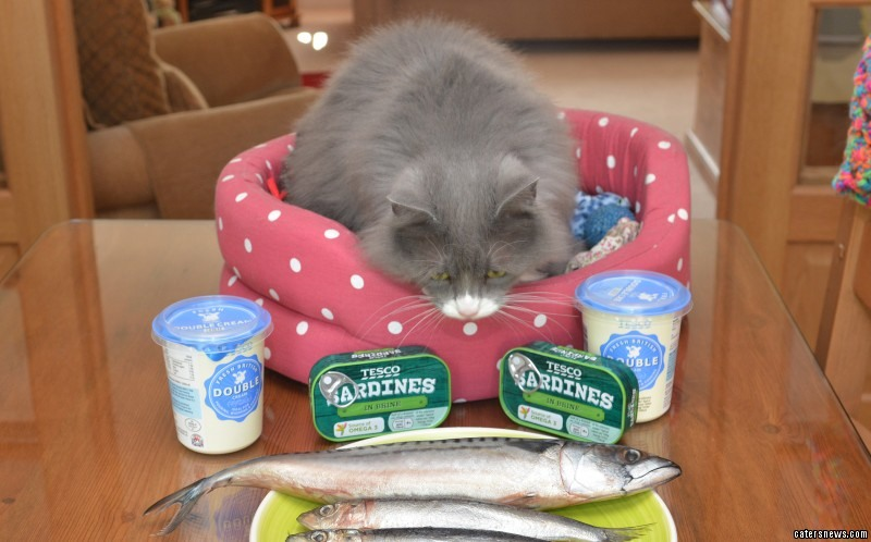A visit to her vet revealed that Munchkin had developed a long list of allergies to every cats favourite treats - including fish, cream, milk, chicken and tinned cat food