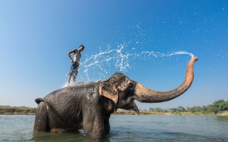 The elephant splashing the man in the lake